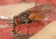 Уничтожение насекомых, грызунов Киев