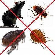 Обработка помещений от тараканов, блох, клопов Одесса