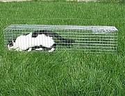 Живоловушка на кота с педалью. Профессиональная Котоловка метровая. ВИДЕО. Суперкотоловка Харьков