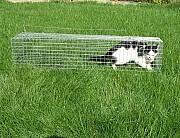 Живоловушка. Котоловка. Котоловушка 0, 7 м. Поймать кота, вернуть в семью. Клетка живоловка котоловк Харьков