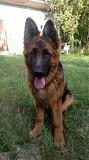 Ушные вставки для собак Киев