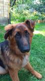 Вушні вставки для собак Киев